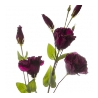 Lisianthus Spray Burgundy