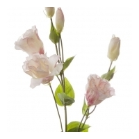 Lisianthus Spray Light Pink