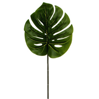 Philodendron Split Leaf Dark Green