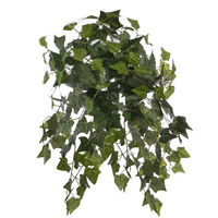 English Ivy Hanging Bush 24 Stems